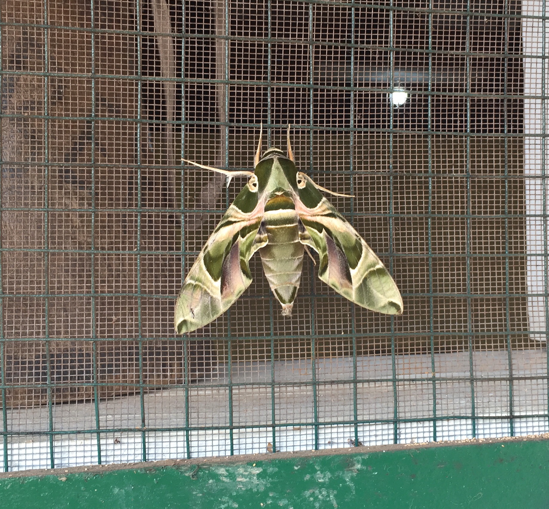Moth in Camouflage